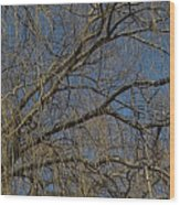 Golden Treetop Wood Print