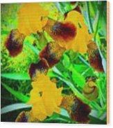 Golden Trio Of Iris Wood Print