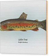 Golden Trout Wood Print