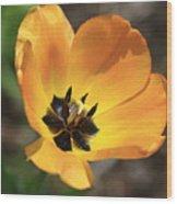 Golden Tulip Petals Wood Print