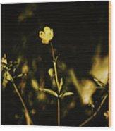 Golden Twinkles Wood Print