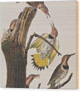 Golden-winged Woodpecker Wood Print
