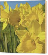 Golden Yellow Daffodil Flower Garden Art Prints Baslee Troutman Wood Print