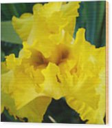 Golden Yellow Iris Flower Garden Irises Flora Art Prints Baslee Troutman Wood Print