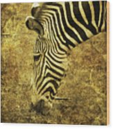 Golden Zebra  Wood Print