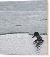 Goldeneye On Ice's Edge Wood Print