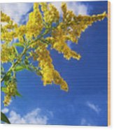 Goldenrod In The Sky Wood Print