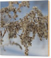 Goldenrod In The Snow Wood Print