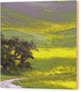 Goldenrod Oak Santa Ynez California 2 Wood Print