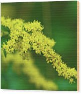 Goldenrod Wood Print