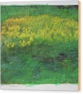 Goldenrods In Field Wood Print