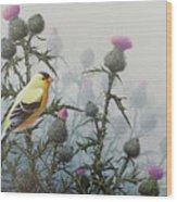Goldfinch And Thistles Wood Print