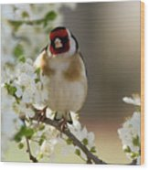 Goldfinch Spring Blossom Wood Print