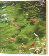 Goldfish In A Pond Wood Print