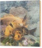 Goldfish In An Aquarium Wood Print
