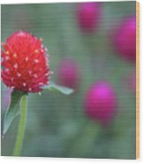 Gomphrena Flower Wood Print