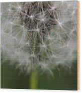 Gone To Seed - Color Wood Print