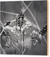 Gone To Seed Berries And Vines Wood Print