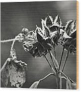 Gone To Seed Hibiscus Wood Print