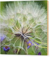 Gone To Seed Wood Print