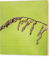 Gone To Seed Wood Print