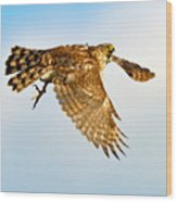 Good Hawk Hunting Wood Print