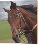 Good Morning - Racehorse On The Gallops Wood Print