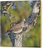 Good Mourning Dove By H H Photography Of Florida Wood Print
