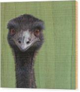 Goofing Around Emu Wood Print