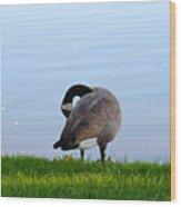 Goose #1 Pose Wood Print