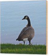 Goose #2 Pose Wood Print