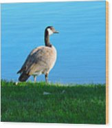 Goose #3 Pose Wood Print