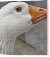 Goose Close Up Wood Print