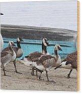 Goose Crossing Mayville Park Wood Print