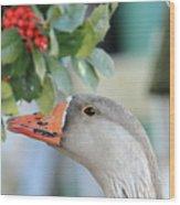 Goose Eating Berries Wood Print