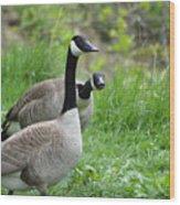 Goose Warning Wood Print