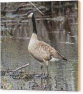 Goose Posing Wood Print