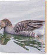 Goose Swimming Wood Print