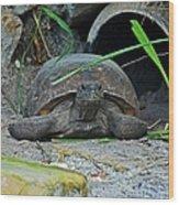 Gopher Tortoise II Wood Print