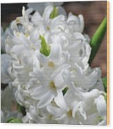 Goregeous White Flowering Hyacinth Blossom Wood Print