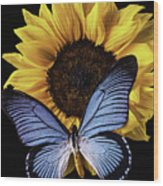 Gorgeous Blue Butterfly Wood Print
