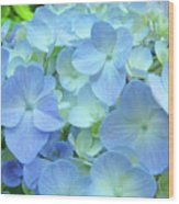 Gorgeous Blue Colorful Floral Art Hydrangea Flowers Baslee Troutman Wood Print