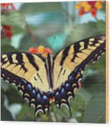 Gorgeous Butterfly Wood Print