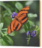 Gorgeous Close Up Of An Oak Tiger Butterfly In Nature Wood Print