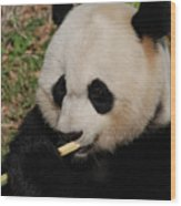 Gorgeous Face Of A Giant Panda Bear With Bamboo Wood Print