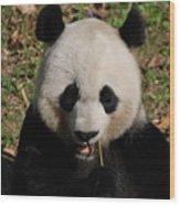 Gorgeous Face Of A Panda Bear Eating Bamboo Wood Print