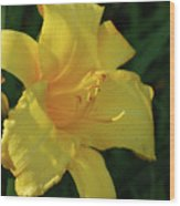 Gorgeous Flowering Yellow Daylily Blooming In A Garden Wood Print