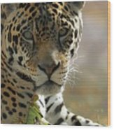Gorgeous Jaguar Wood Print by Sabrina L Ryan