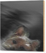 Yorkie Joy Painting Wood Print