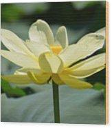 Gorgeous Lotus Flower Wood Print